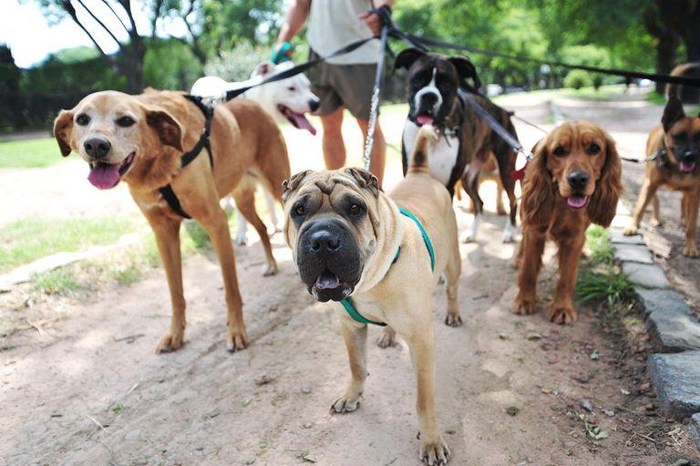 Dog walker: você ainda pode precisar de um