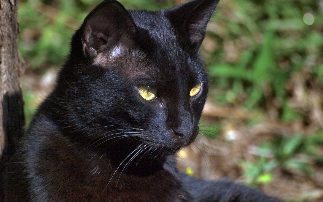 Os 5 mitos mais comuns sobre gatos