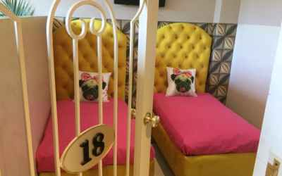 Hotel de luxo para cachorros é inaugurado na Índia