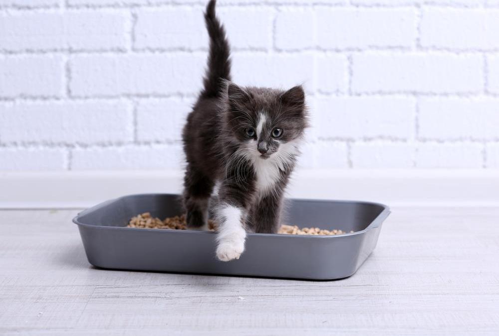 5 razões pelas quais os gatos evitam usar a caixa de areia