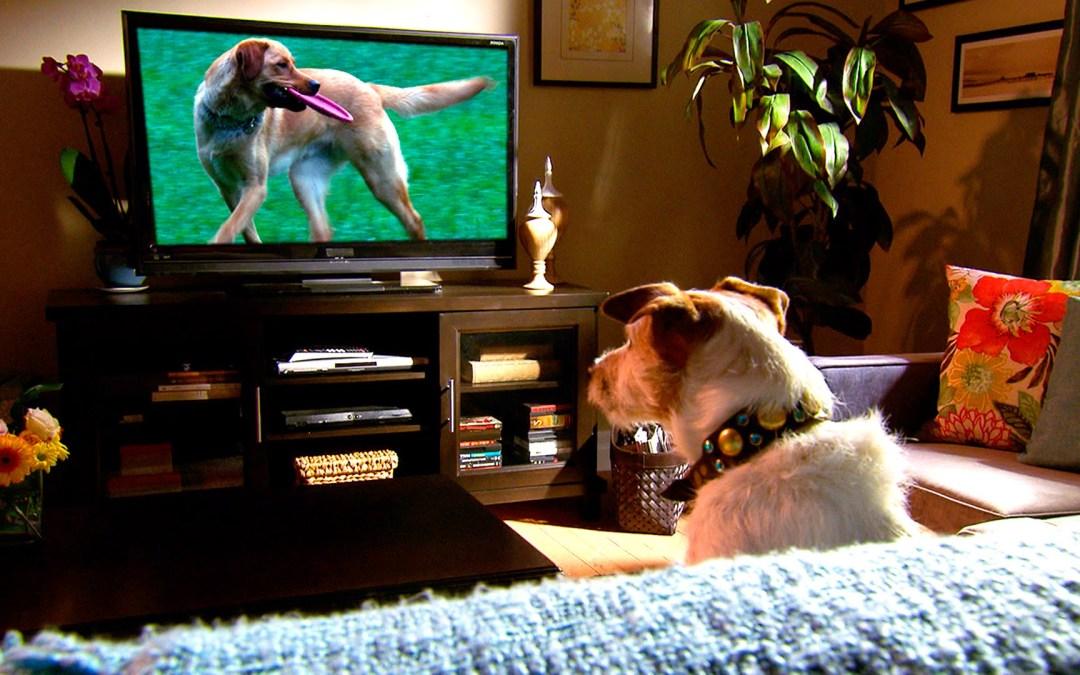 Conheça o primeiro canal de televisão para cães