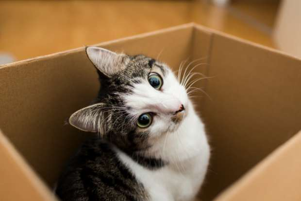 Como cuidar de um gato?