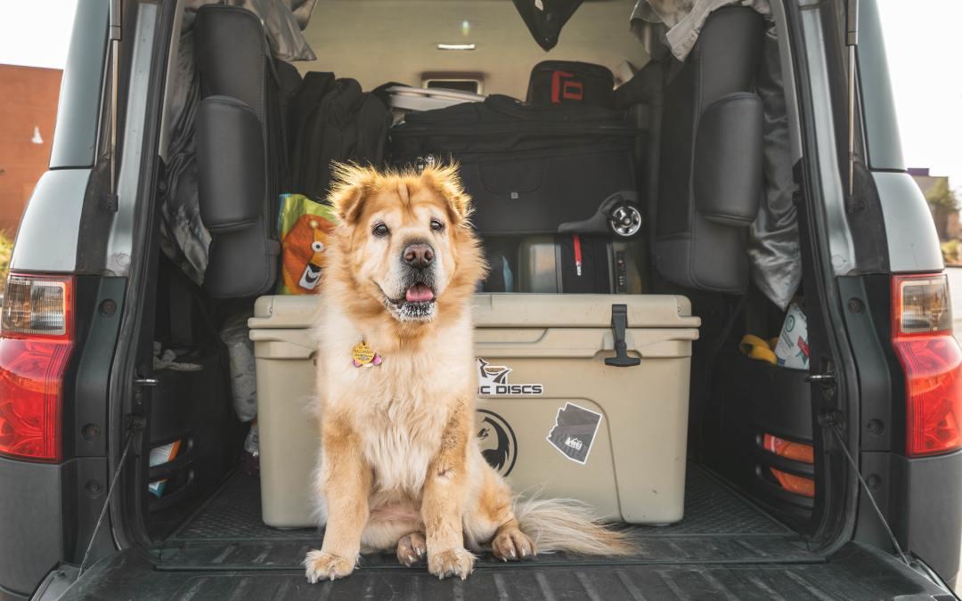 Vai viajar de carro com seu cão? Confira algumas dicas