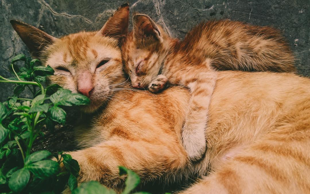 5 cheiros que os gatos não gostam