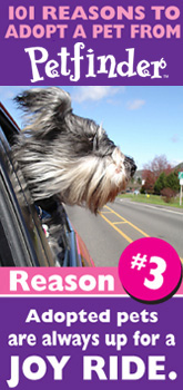 Petfinder: 101 Reasons to Adopt ... pets are up for a joy ride