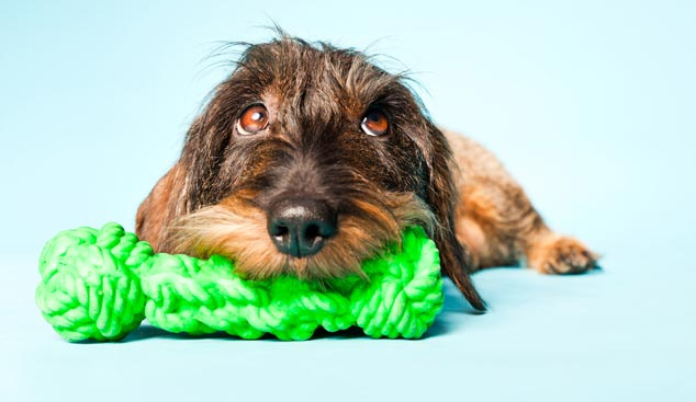 Picture of a dog and a green rope toy