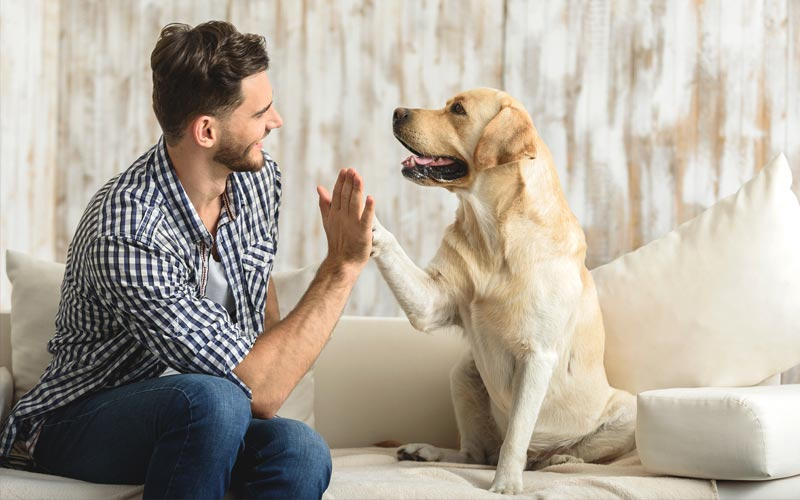 Picture of dog shaking a paw