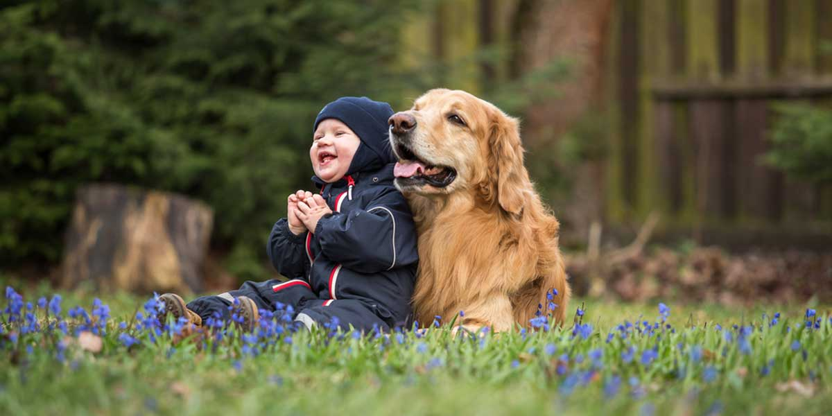 Picture of bay and a Golden Retriever in the backyard