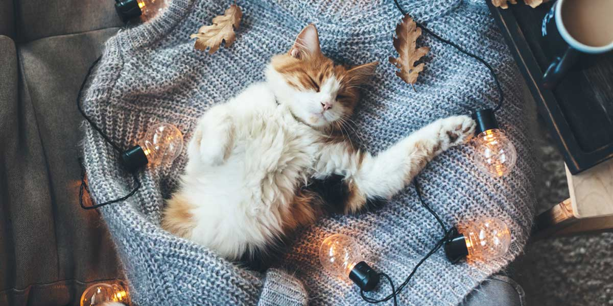 Picture of a cat laying on a sweater