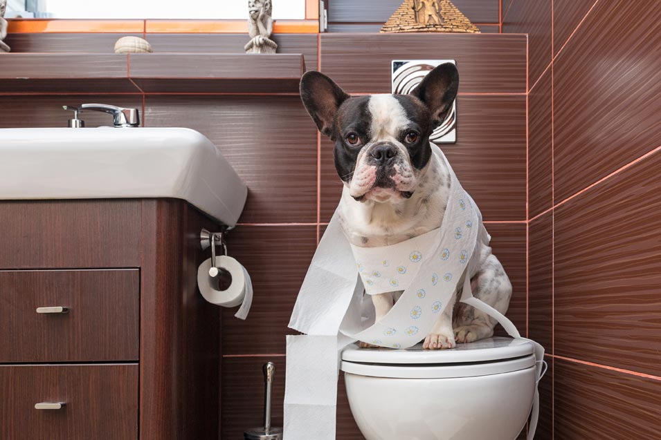 Picture of dog sitting on a toilet