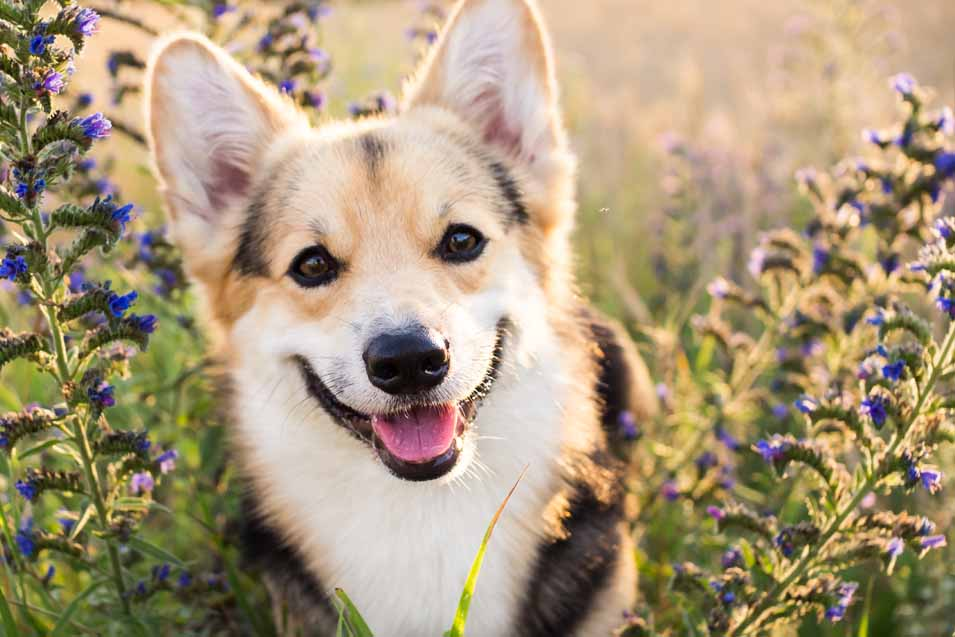 Picture of dog in the flowers