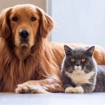 Image of dog and cat sitting together