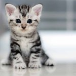 picture of a small cat