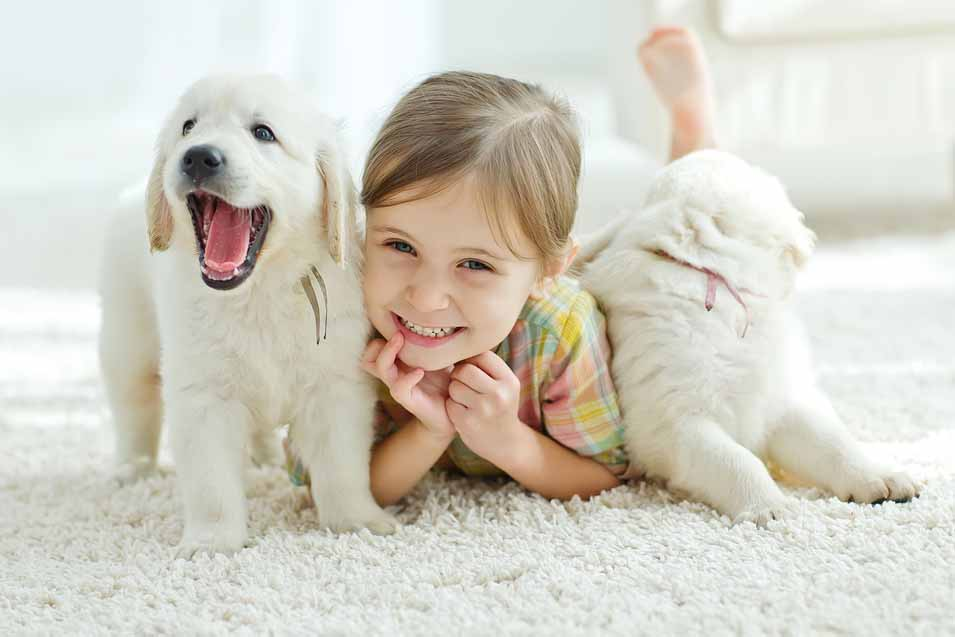 Image of 2 puppies and a girl on a rug