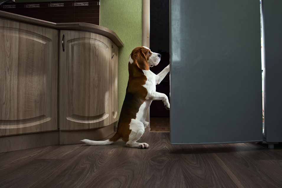 Picture of dog by the fridge