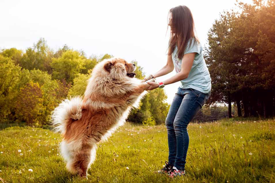 Picture of Chow Chow and a woman in the park