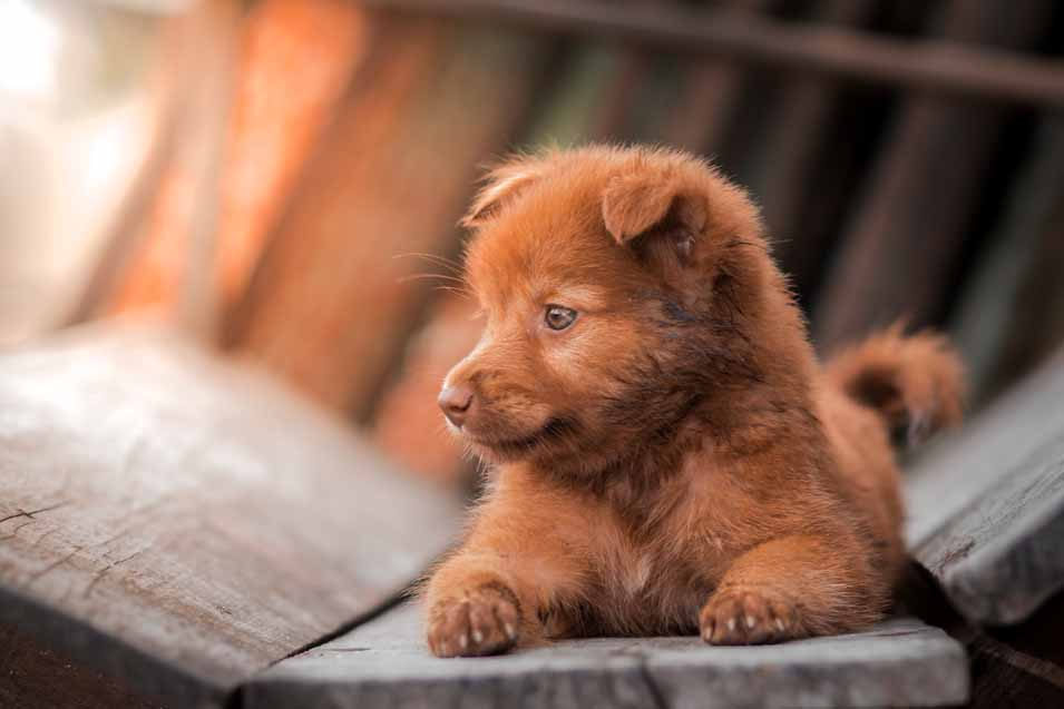 Picture of a puppy outside