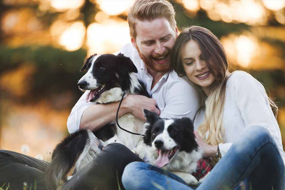 Dating websites for animal lovers