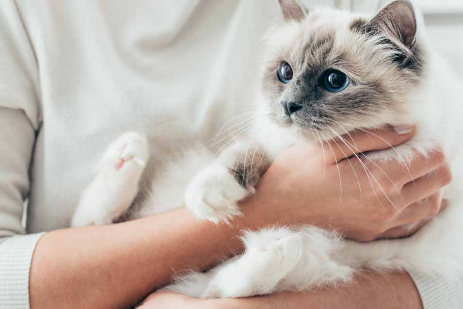 Picture of woman holding a Siamese cat