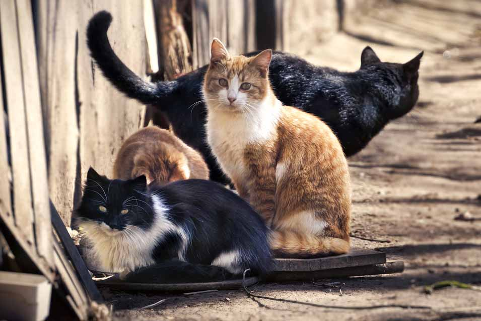 Picture of cats outdoors