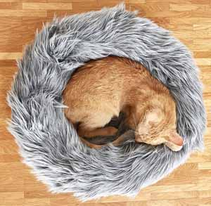 Picture of a cat in a bed