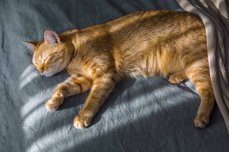 Picture of orange cat on a bed