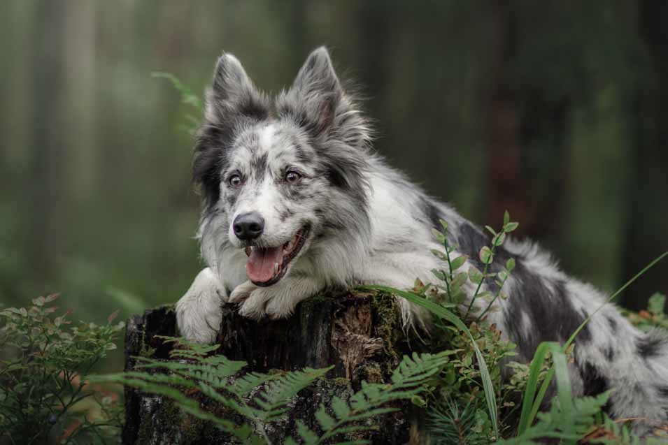Picture of dog on a tree stump
