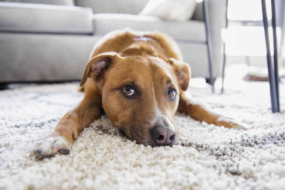 Picture of a dog on a rug
