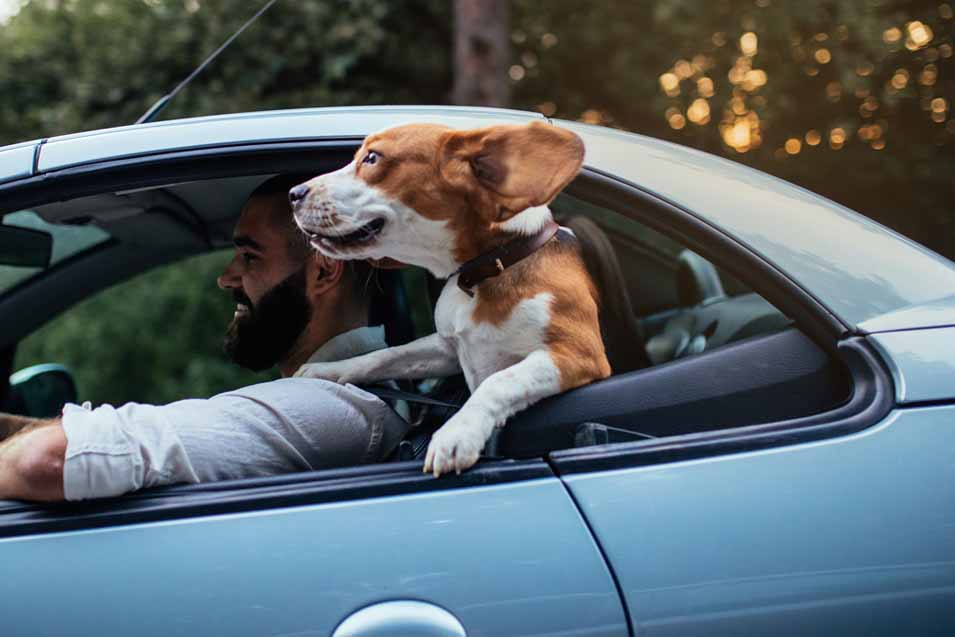 Picture of a dog in a blue car