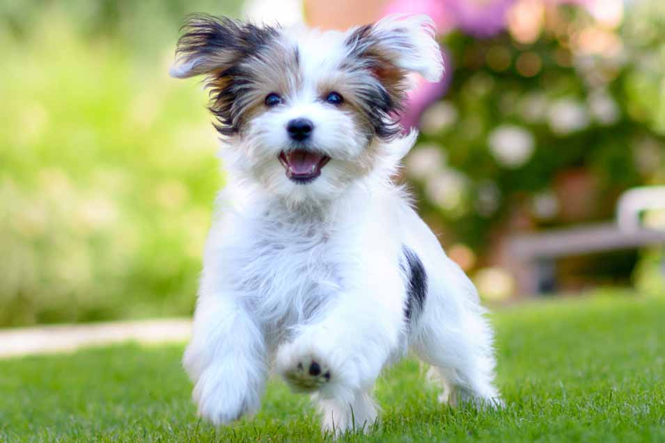 Picture of dog on grass
