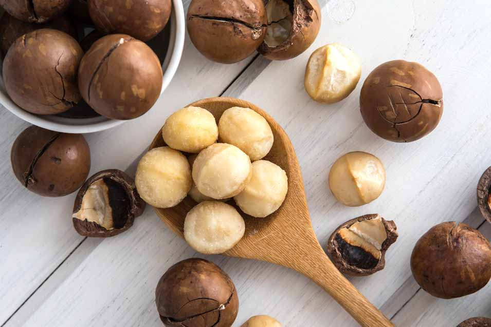 Picture of Macadamia nuts