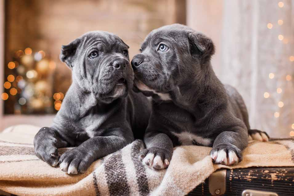 Picture of 2 puppies in a house