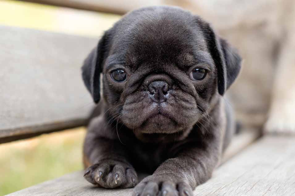 picture of cute puppy