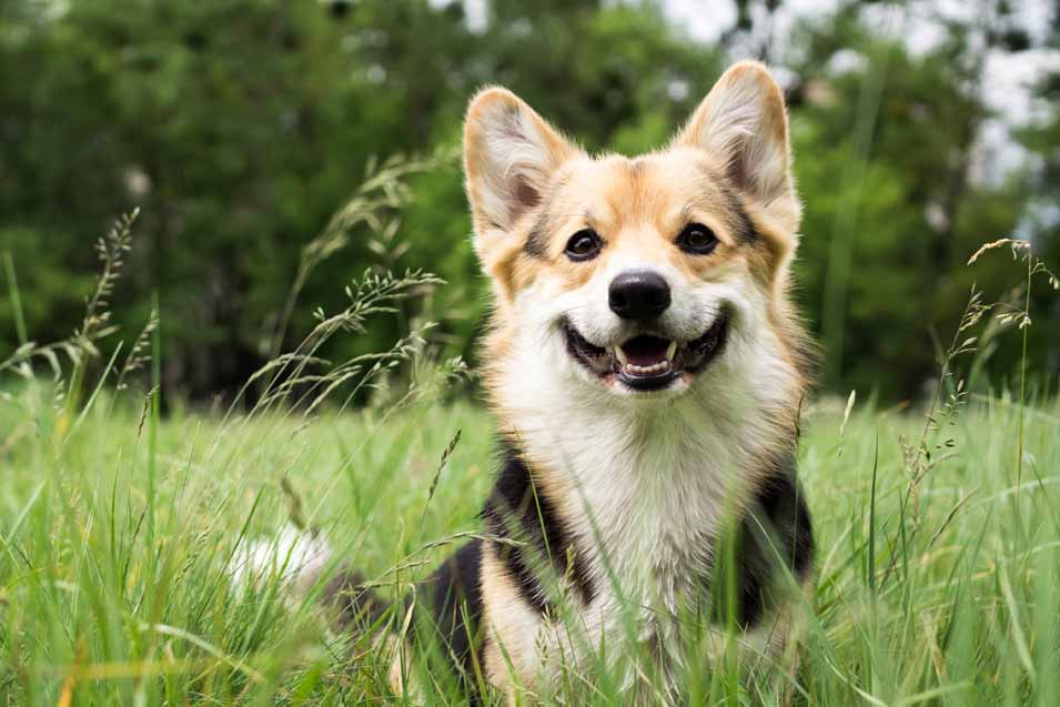 Picture of a dog standing in grass