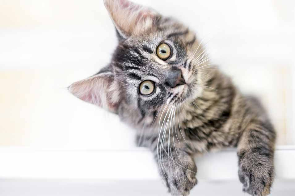 Picture of a cute kitten