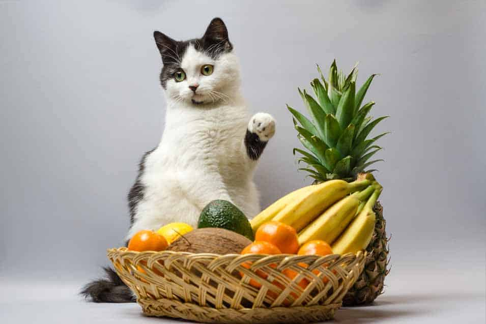Picture of a cat with bananas and other fruit