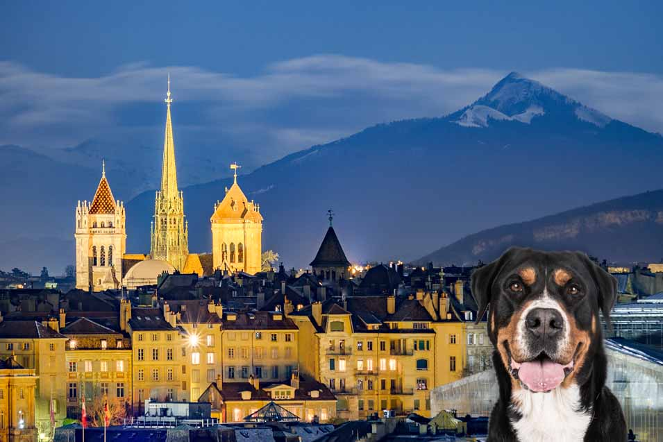 Picture of a dog in Geneva
