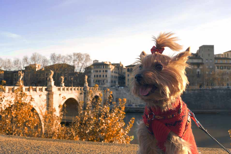 Picture of a dog in Rome