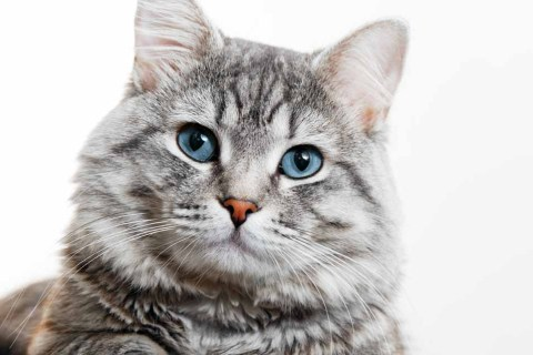Why Do Cats Run Away to Die   Pet Friendly House
