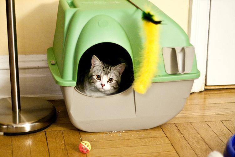 Photo of cat inside a litter box