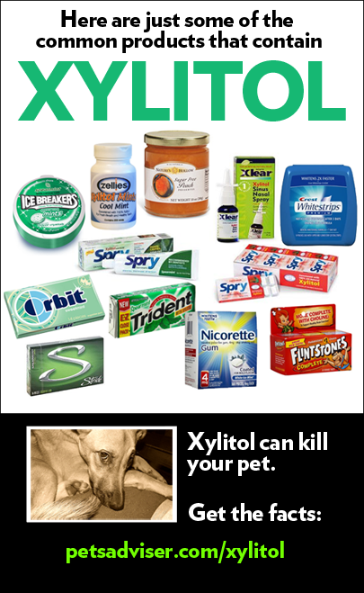 Image result for dog and xylitol