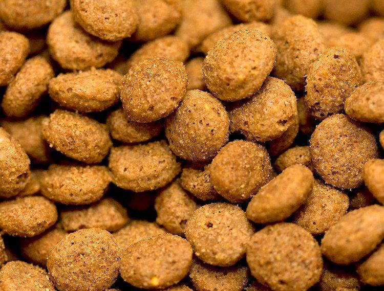 Photo of dry dog food