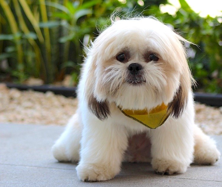Photo of a cute little white dog looking a little nervous