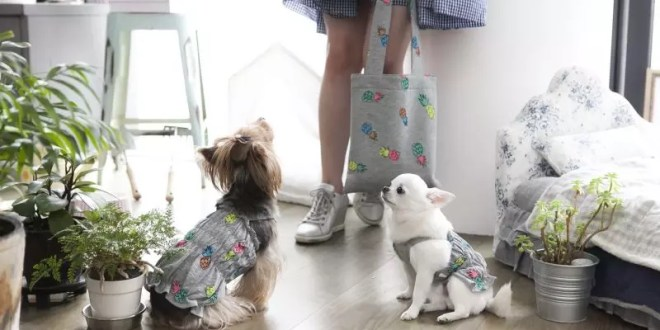 PetLondon launches smoothie-inspired dog outfits and accessories