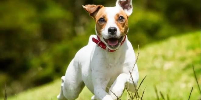 Eukanuba, Discover Dogs, Puppies