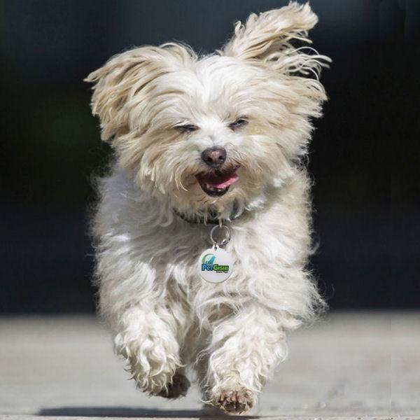 dog-tag