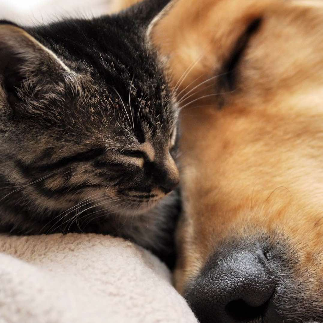 Do cats shed more than dogs?