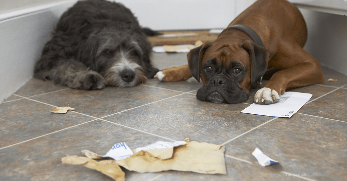 Image result for dogs eating paper products