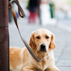 dog tied to a post unattended