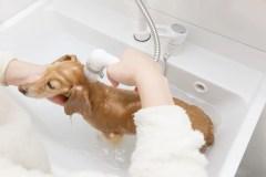 犬の自宅シャンプー後の注意